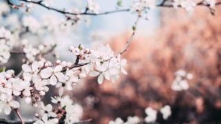 アフィリエイトブログ実践記|4ヶ月目~6ヶ月目の収益とPV数